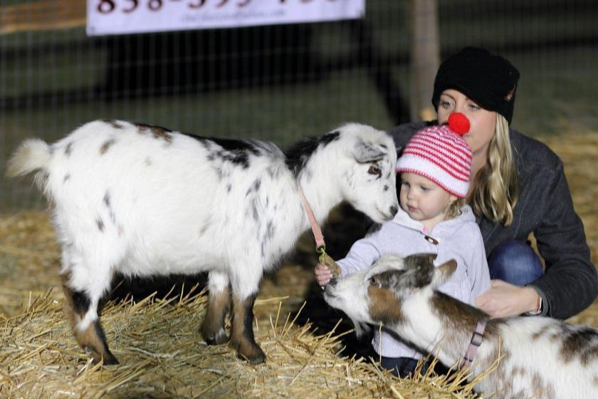 Guests enjoy a visit with goats in the petting zoo at last year's Living Nativity event. (Jon Clark)